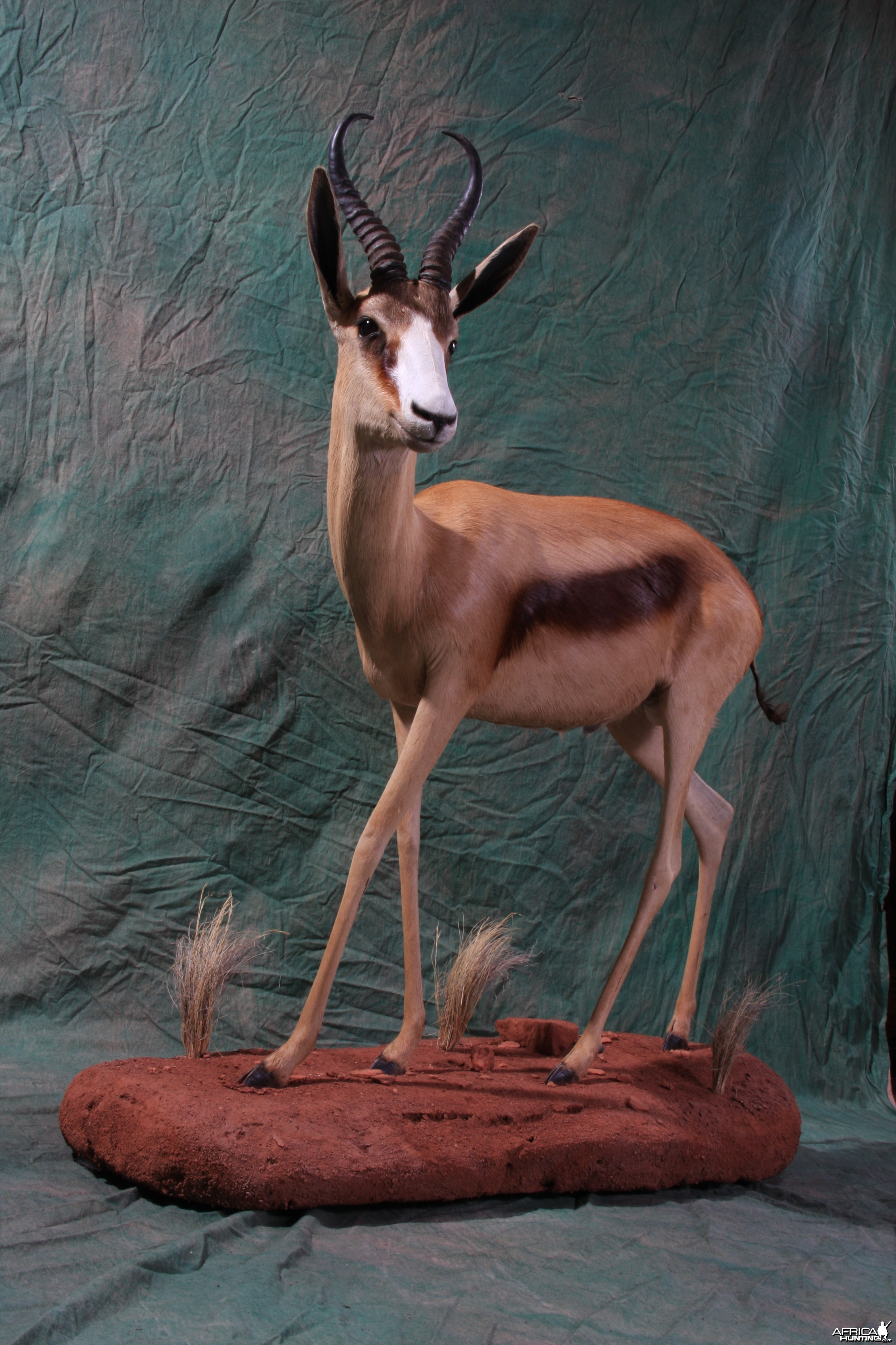 Copper Springbok by Kapraun Wildlife Studios