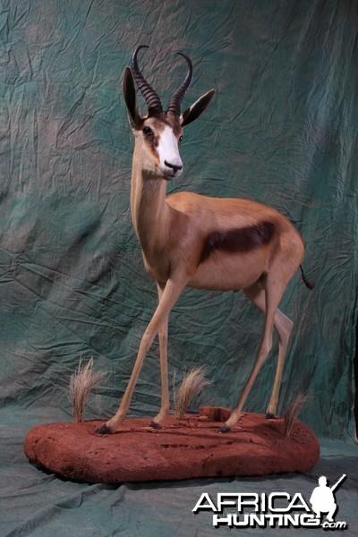 Copper Springbok by All-American Taxidermy