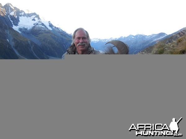 New Zealand Tahr 2014