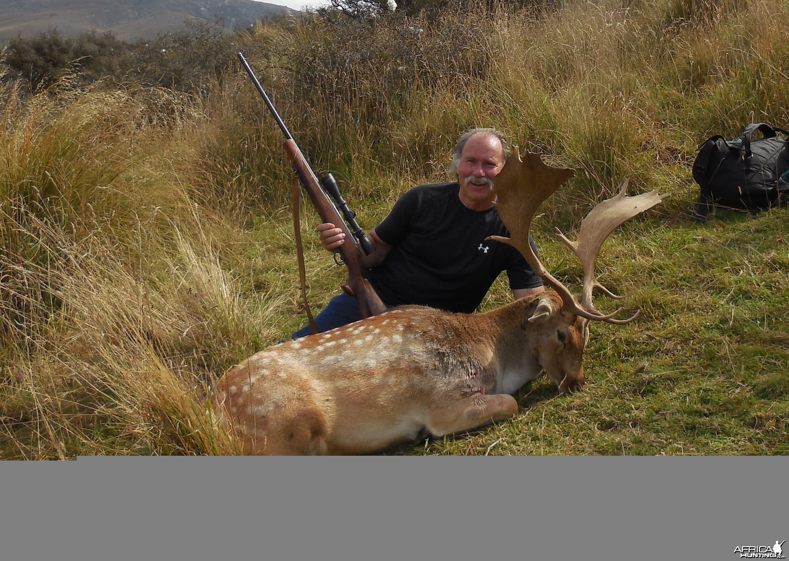 New Zealand Fallow Deer