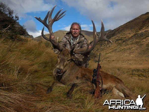 New Zealand Red Deer Stag