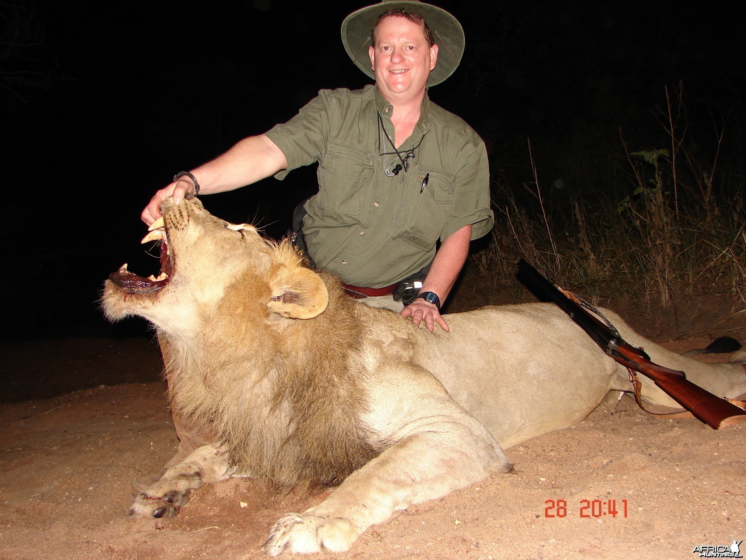 Lowveld Lion with a double
