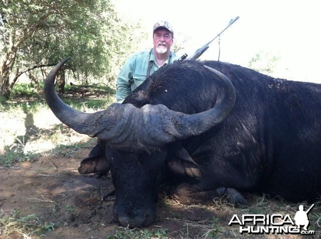 Cape Buffalo 2014