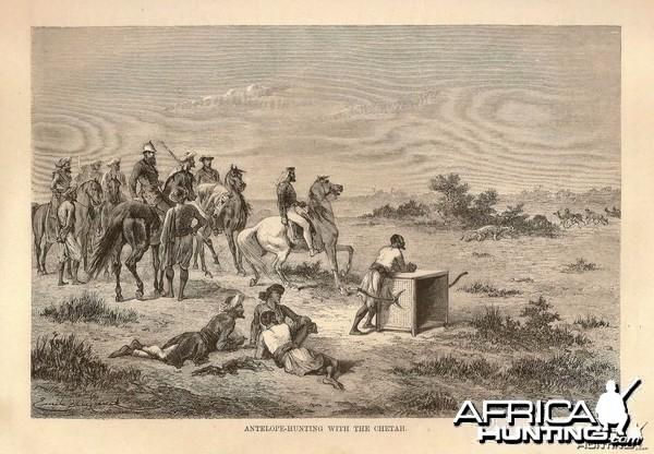 Wood Engraving Hunting Antelope with Cheetah India 1876