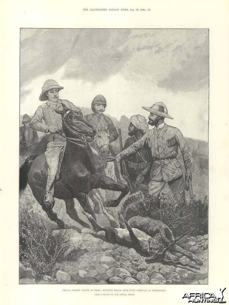 Hunting Black Buck With Cheetah 1890