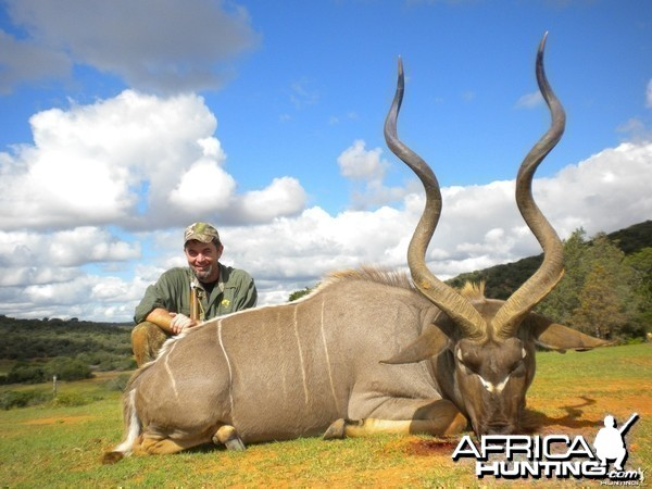 Free range Cape Kudu