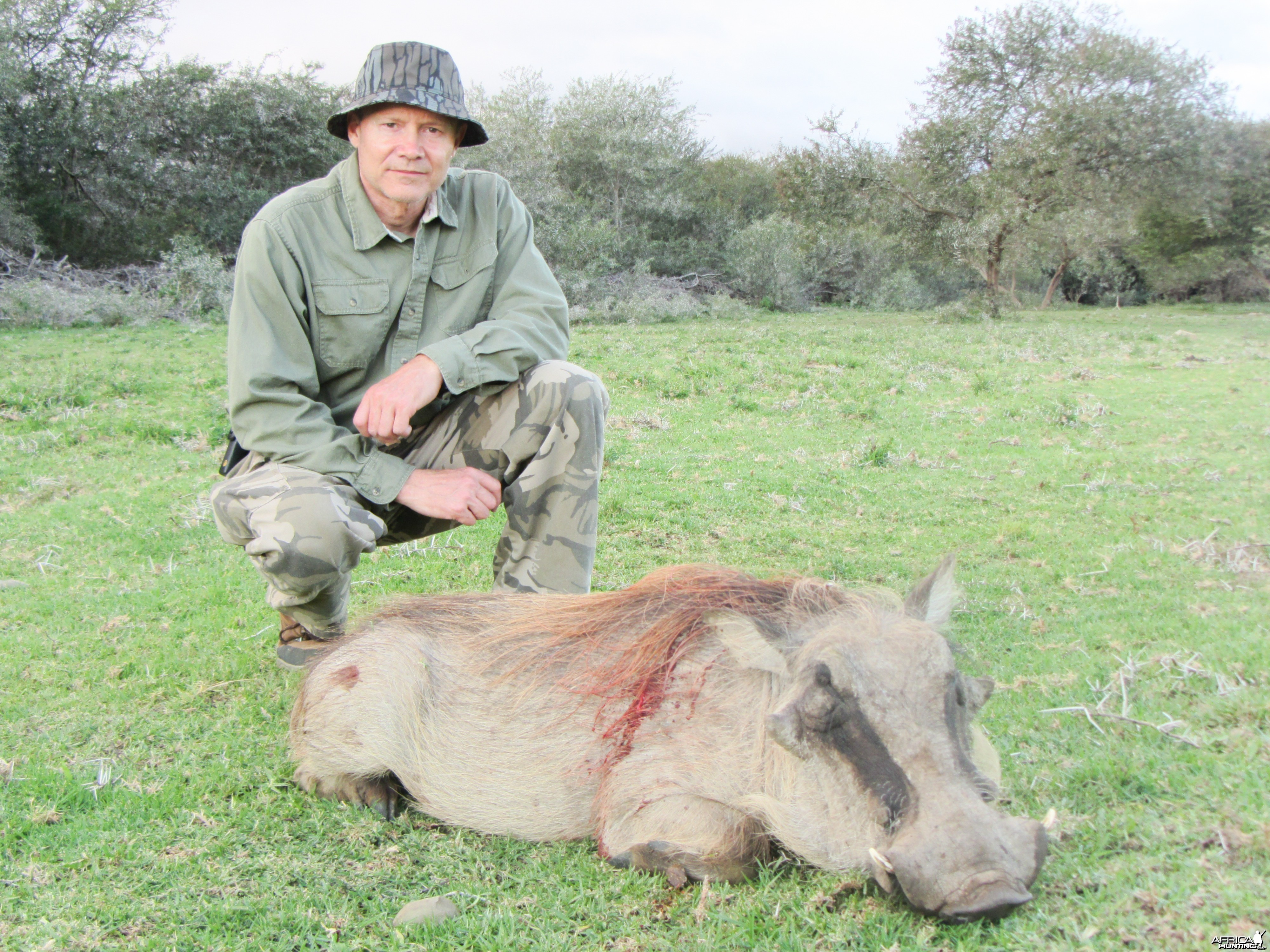 pig tossed by rhino