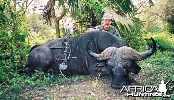 Buffalo ~ Mozambique