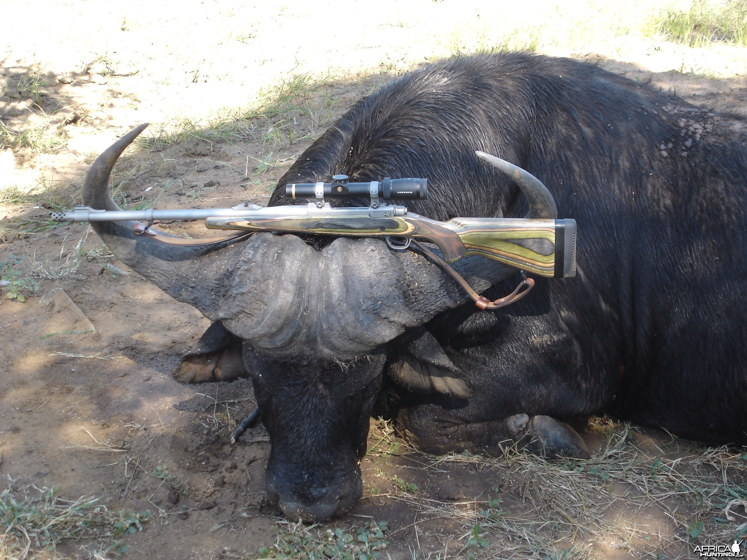 Ruger 416 Guide Gun with Cape Buffalo