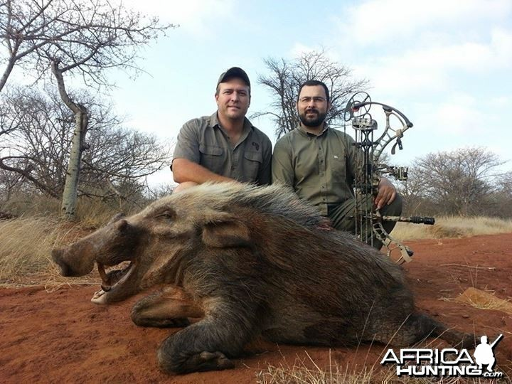 Bushpig shot over bait