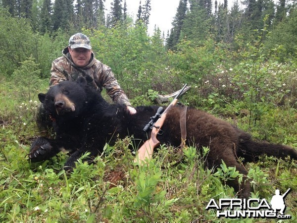 Black Bear Ontario Spring 2014