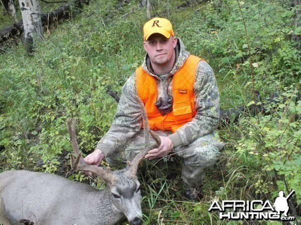 2013 Mule Deer Colorado