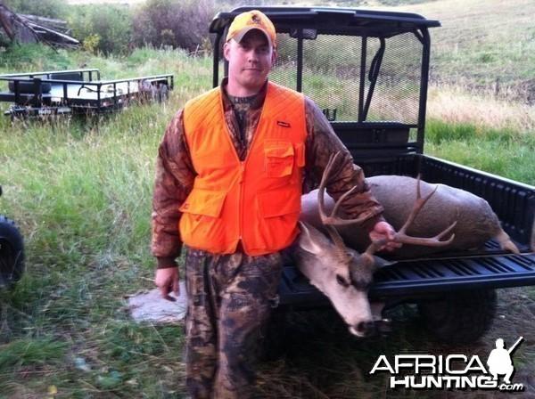 Colorado Mule deer 2011
