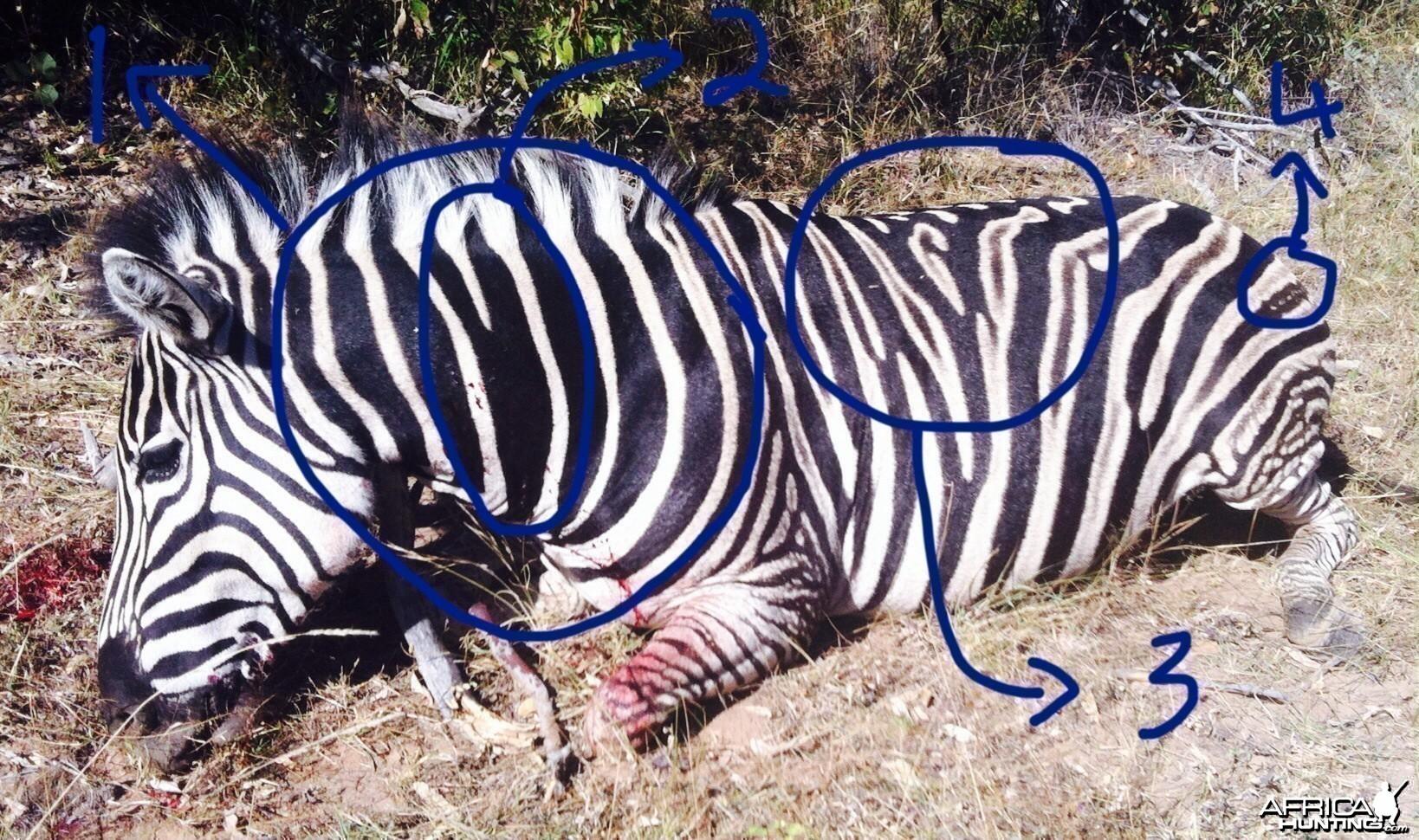 Black Zebra?