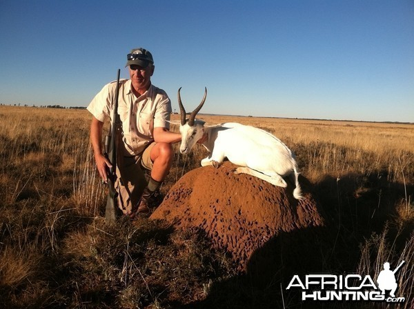 Free State White Blesbok, June 2014