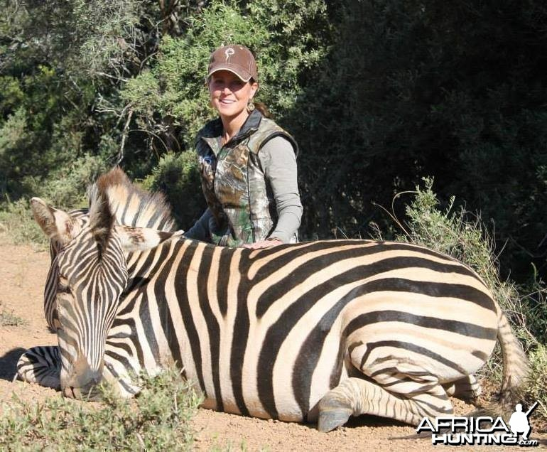 Burchell's Zebra hunted in Kleinemonde, Eastern Cape, South Africa.