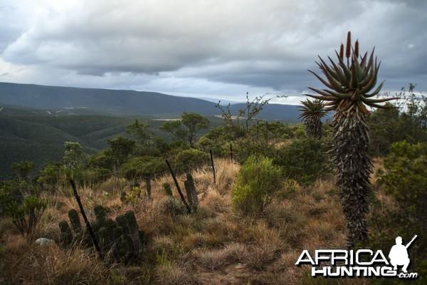 Nature Photo of Tootabi Hunting Safaris from mountain