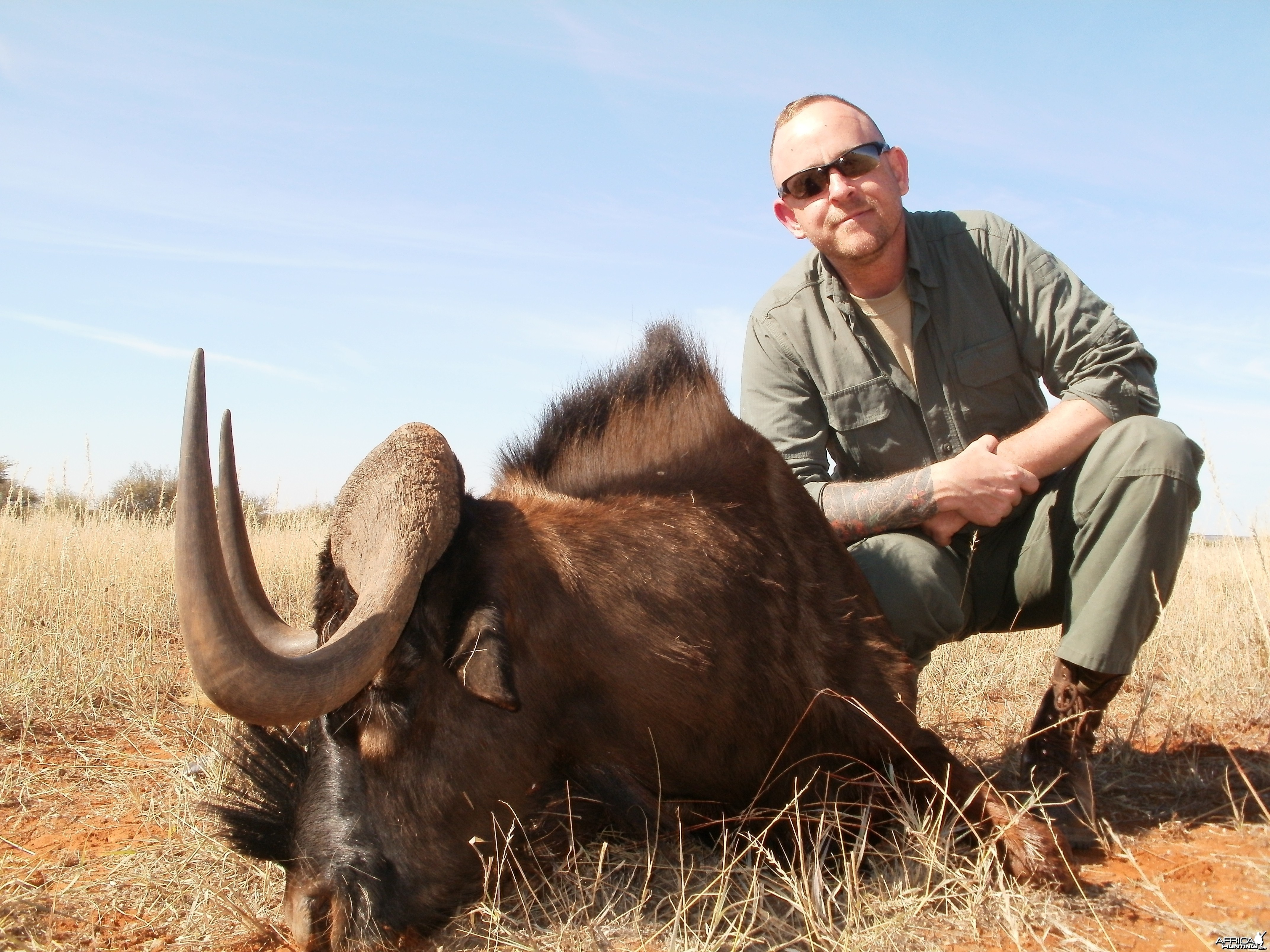 Black Wildebeest 2014