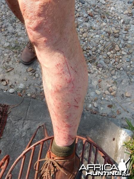 razor grass results - Zambezi Delta