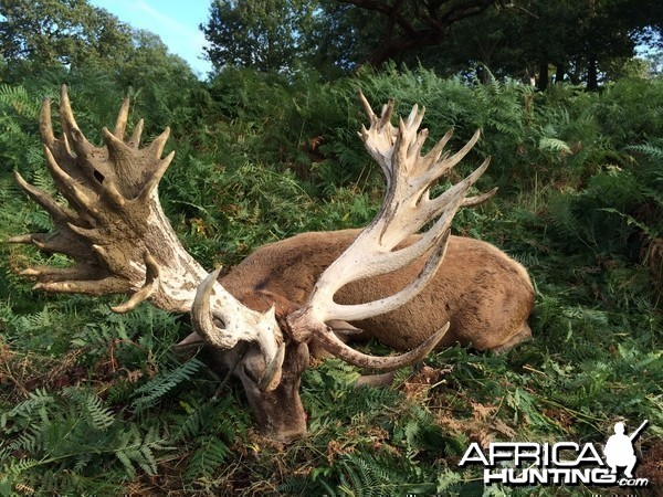 Fingers crossed the new British Record Red Stag