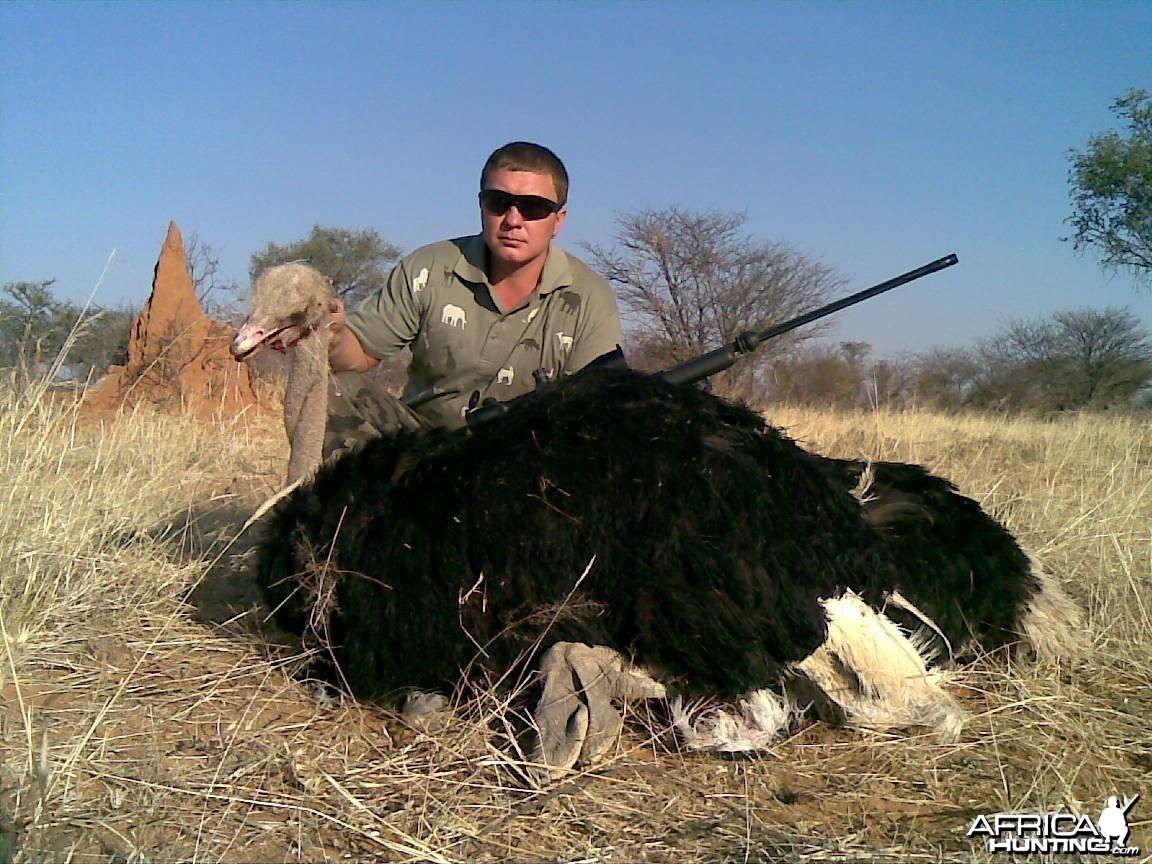 Hunting Ostrich