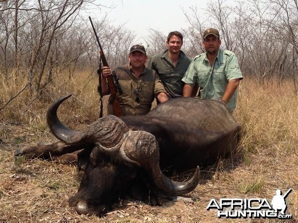 Big Old Cape Buffalo