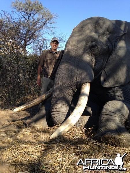97x103 pounds Elephant Zimbabwe