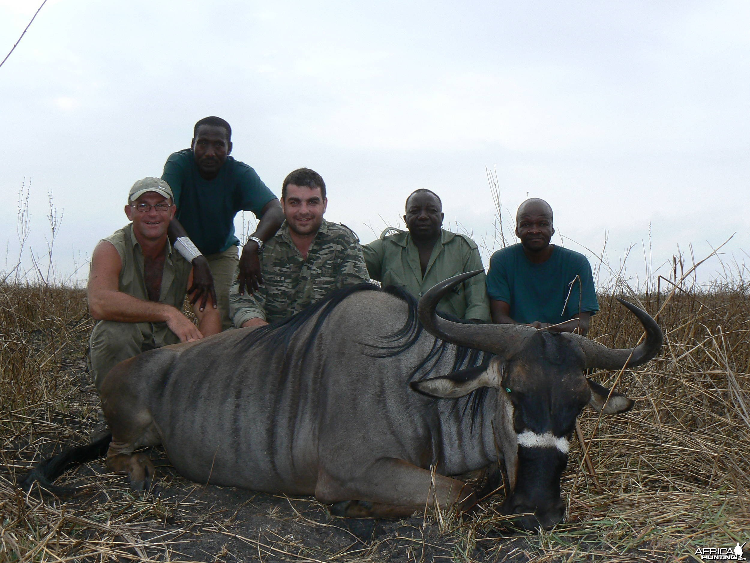 Nyasaland gnu in Tanzania