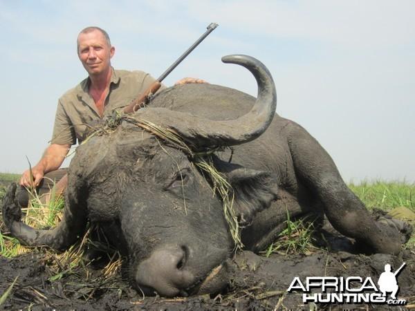 zambeze  delta buffalo