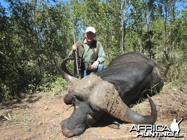 Buffalo 2015 Bulls with Spear safaris