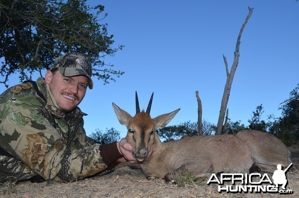 Duiker KMG Hunting Safaris