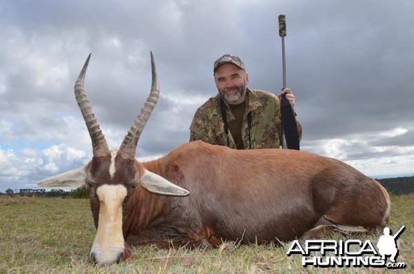 Blesbok KMG Hunting Safaris