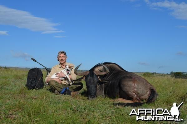 Blue Wildebeest KMG Hunting Safaris
