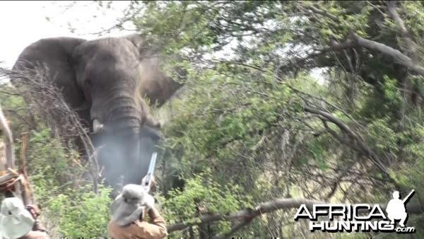 Zimbabwe Elephant, November 2014