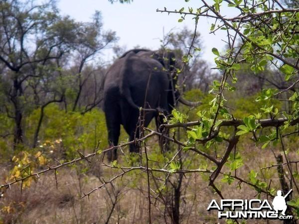 Elephant Zimbabwe, November 2014