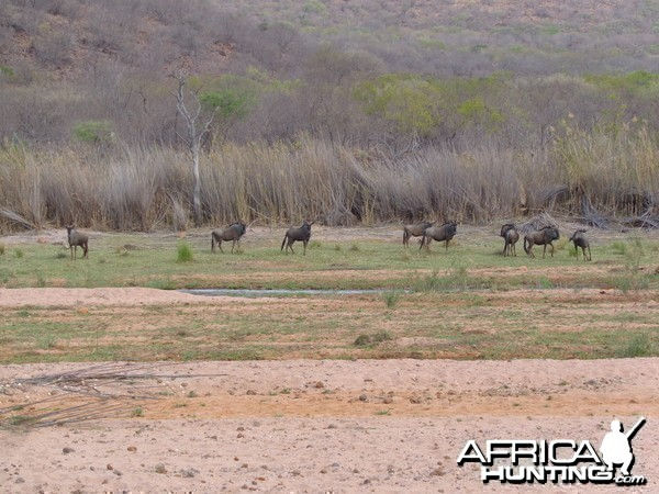 Arc Africa Hunting Safaris - Waterberg Concession