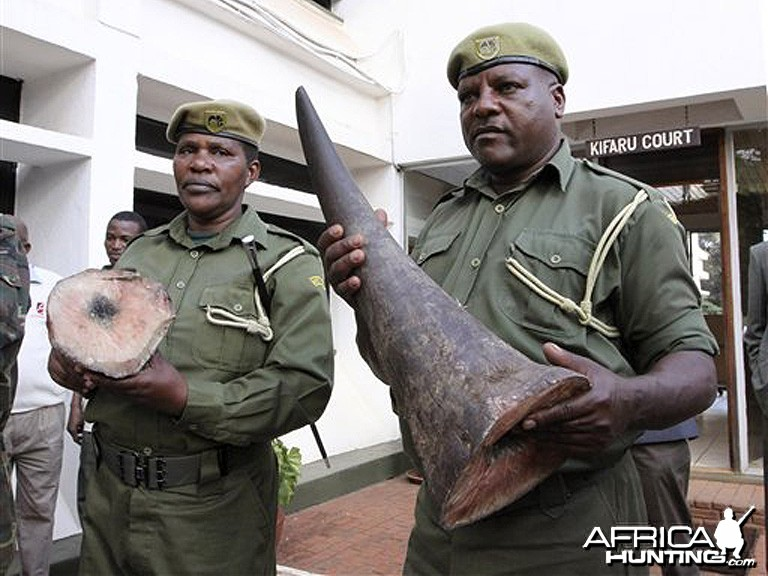 Seized Black Rhinoceros Horn