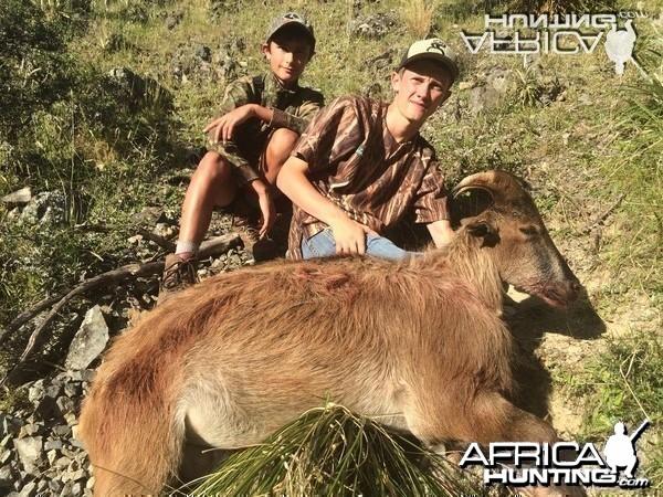Summer Bull Tahr Hunt