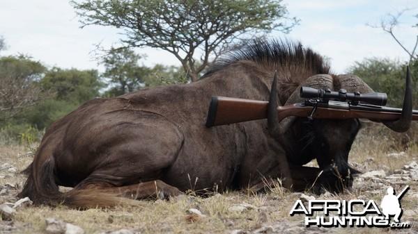 Black Wildebeest 2014