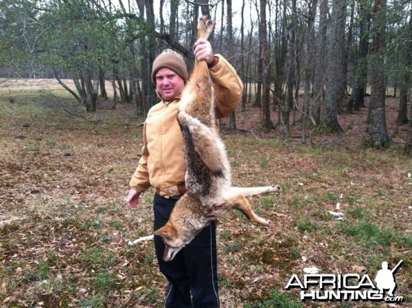 Crenshaw County Coyote