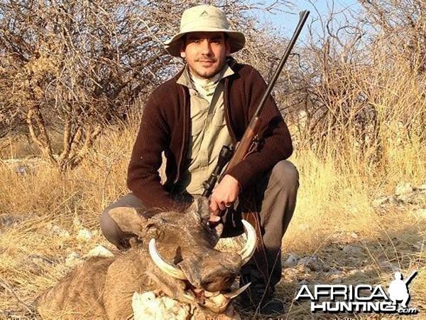 hog hunted at Westfalen Hunting Safaris Namibia hunted at Westfalen Hunting