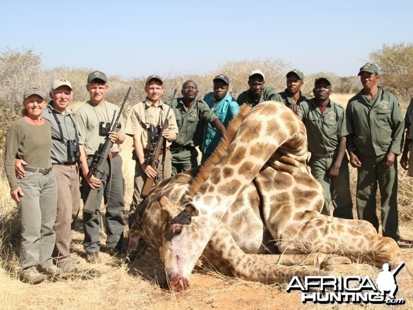 Giraffe hunted at Westfalen Hunting Safaris Namibia