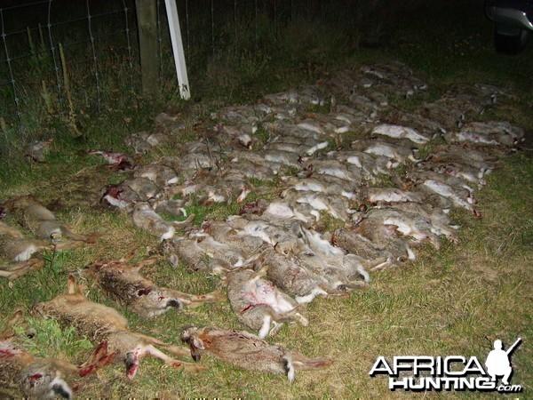 Hunting Hares and Rabbits