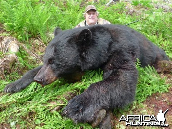 Black Bear British Columbia