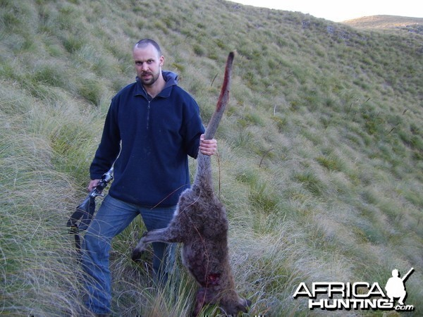 Hunting Wallaby New Zealand