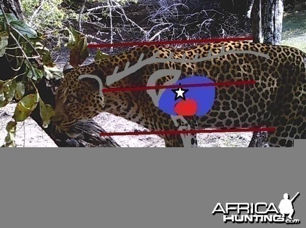 Leopard Shot Placement