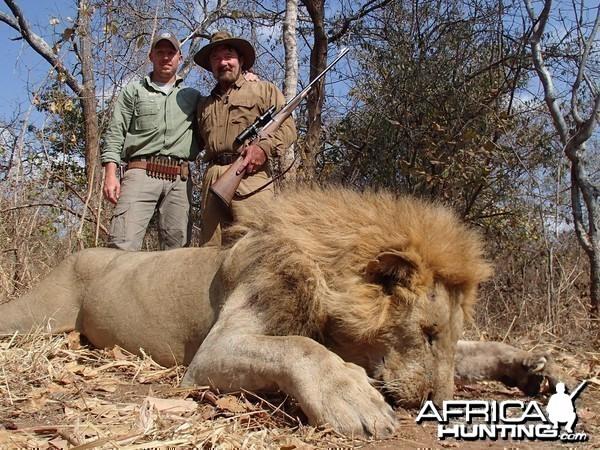 Lion - Bullet Safaris