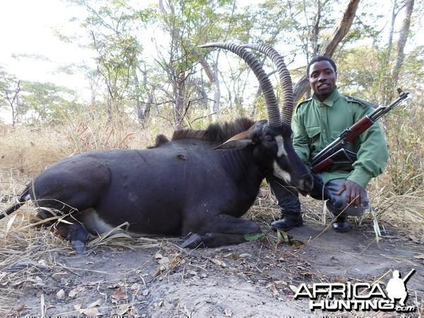 Sable - Bullet Safaris