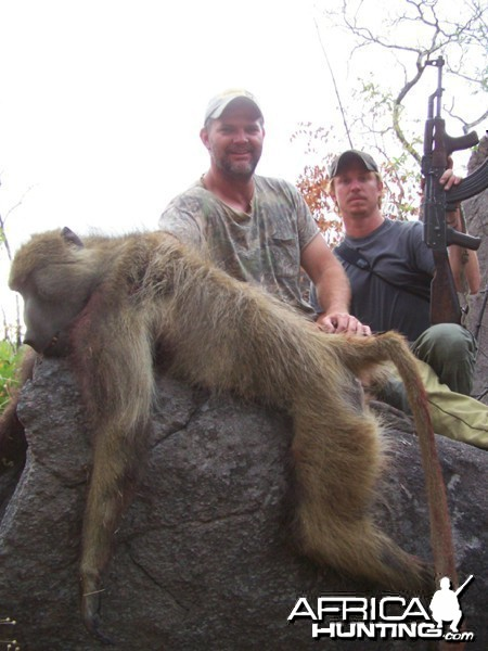 Baboon Mozambique