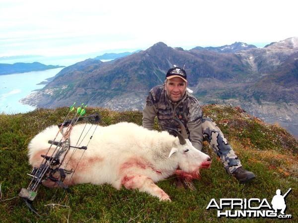 Goat in Alaska